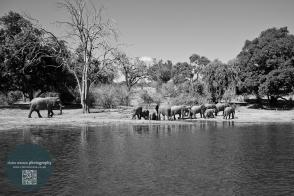 African Animals 3