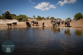 African Animals 2