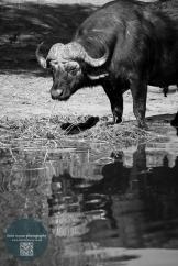 African Animals 18