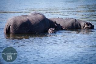 African Animals 16