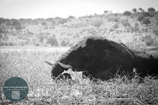 African Animals 14