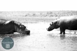 African Animals 13