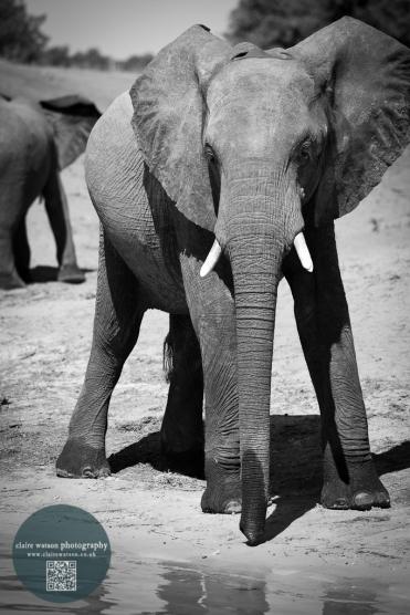 African Animals 12