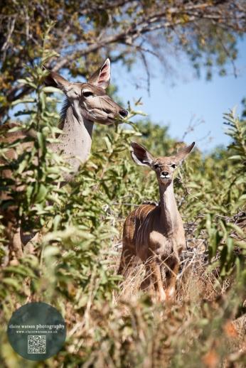 African Animals 10