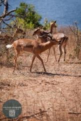African Animals 9