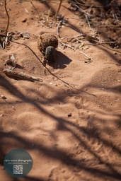 African Animals 6