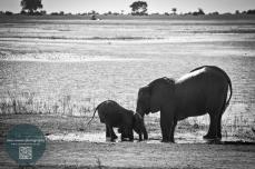 African Animals 4