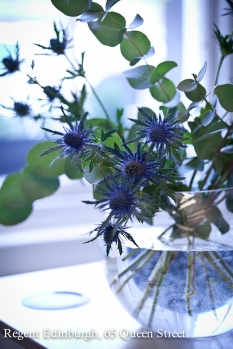 Thistles in a vase