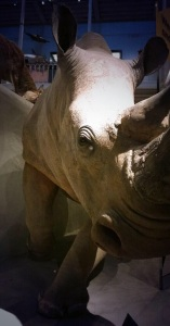 Smart phone photography rhino