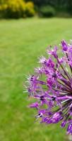 Smart phone photography training flowers