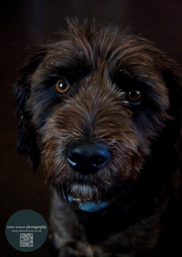 dog close dark background