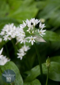 white flower green back ground